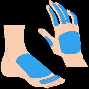 手の甲・指、足の甲・指
